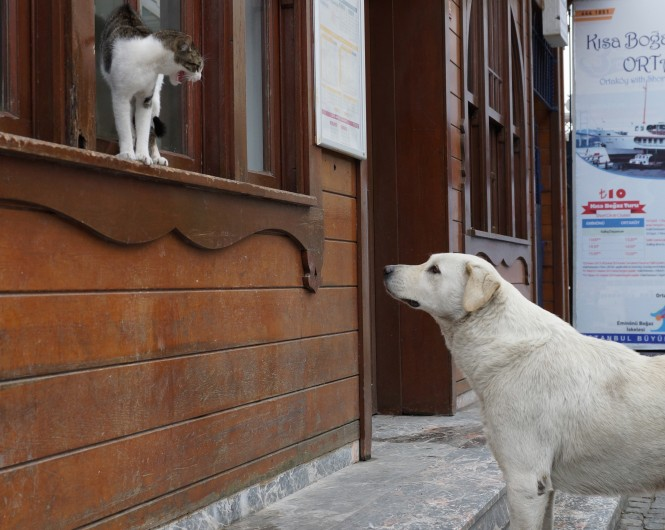 Cats and dogs in Istanbul