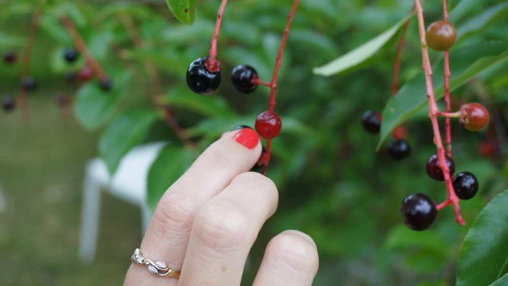 Berries-Poland-Savvy-Spice