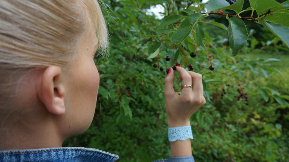 Picking-berries-Savvy-Spice-fashion-blog
