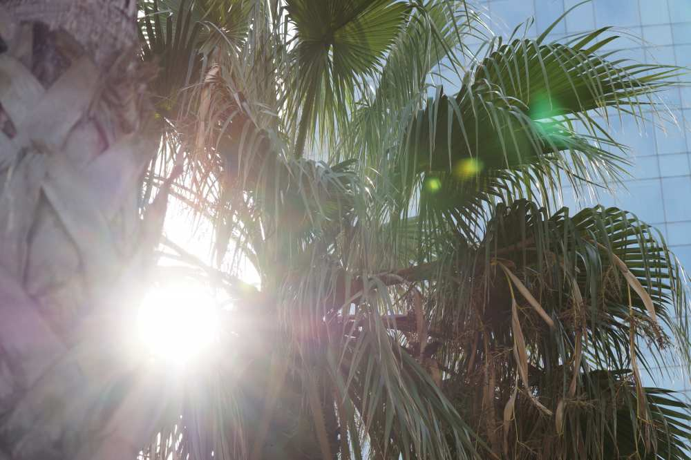 Barcelona-Palm-Tree-Savvy-Spice-dale-janee