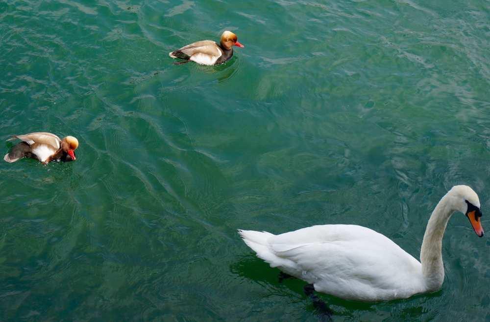 Lake Luzern Switzerland Savvy Spice 1
