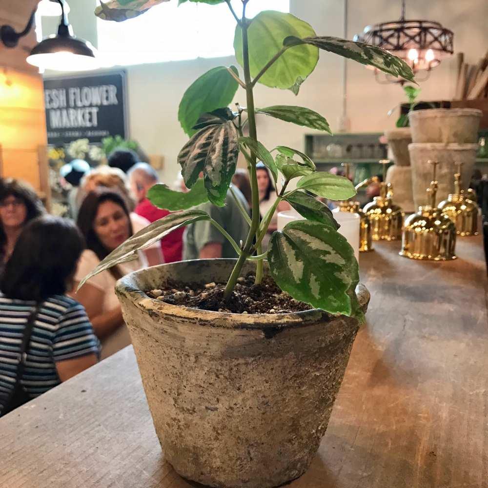 Fixer Upper Waco Texas fresh flower market